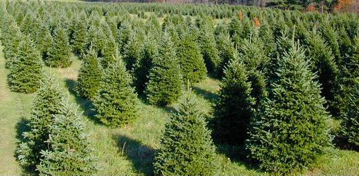 Mariemont Boy Scout Christmas Tree Sale